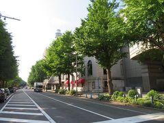 山下公園通り 新緑の銀杏並木、黄葉の時期にも来てみたいな。