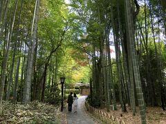修善寺を小京都と呼びますが、嵐山の竹林みたいですね。