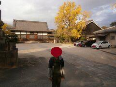 とても広い境内の番外札所の海蔵寺に到着しました。こちらにも大きなイチョウの木があります。