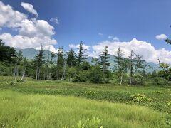 立木と湿地帯の草原が絵になる風景です。