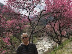 まず、阿智村にある月川温泉近くの園原の里をたずねた。 ここは恵那山トンネルを掘削した土で畑を作り花桃を植え、一面の花桃の花が咲く名所とか。 しかし、開花には一週間ほど早く、壮観を確認できなかったことが残念。 少し下ると花桃が現れた。