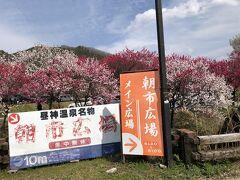 花桃街道を走りながら右手を見ると、花盛りの林が見える。 車を乗り入れてゆくと、昼神温泉の朝市広場だ。