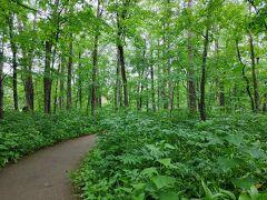 生憎の雨だが、十勝千年の森の緑が映える。