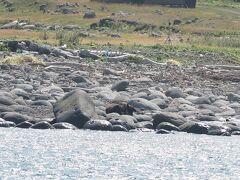 ヒグマはルシャ湾に1匹いたけど寝ていて動かず。ってヒグマ遠っ。双眼鏡やズームレンズは必須です。