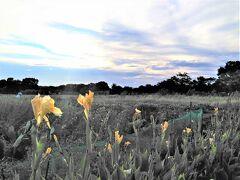 「氷川女體神社」はこの写真の奥の林の中にあります。  4Travelの『見沼田んぼ』のページの地図が指し示す中心の景色がこの写真です。 今では、田んぼはなくなり、代わりにほとんどが畑になっていて、野菜の他に、造園業者による植木の育成畑になっています。  昔の『見沼田んぼ』の特徴は、「池(沼)」「見沼代用水」「雑木林」「緑が広がる田園地帯」の4つです。それらが残されているのは、今日回ってきた自然公園などくらいなのかもしれません。   ******************** この続きは「『見沼田んぼ②』見沼代用水・見沼通船堀と桜回廊」⇒ https://4travel.jp/travelogue/11707816