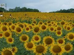 道の駅「田園の里うりゅう」 から車で275号線を10分程、北へ走って 道の駅「北竜温泉」へ。 去年はコロナでなかったひまわり畑も 今年は見事に咲いています。