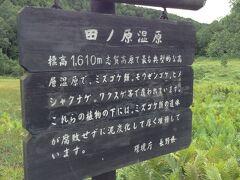 田の原湿原 ここは標高1600m。 コケ類が層になって重なった地層でふかふかだそうです。