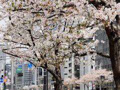 食後の散歩がてら、日比谷からホテルまではお散歩。 少し葉っぱが出てきちゃっているけど、桜咲く都内がここまで空いている状況で巡れるのはなかなかないチャンスですね。