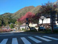 下道を走って昼神温泉まで来ました。 こちらでも、花桃が咲いています。