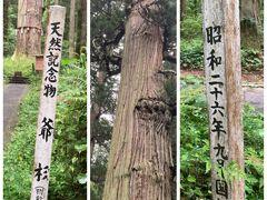 ⬜︎ 樹齢1000年の巨杉「爺杉」じじすぎ