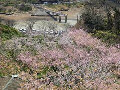 バス停は坂の上なので、降りていくと桜が下に見えてきました。 約2時間後のバスに乗る予定です。