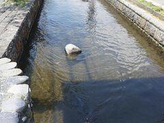 ●堂田川@県道180号線沿い  バス停のある県道180号線沿い。 綺麗に川が整備されていました。