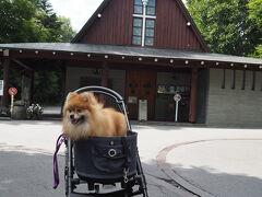 なるべく旧軽井沢銀座を避けて裏へ裏へ。  おっ、カトリック軽井沢教会。  やこちゃんに見せようにも、彼女は興味なし。