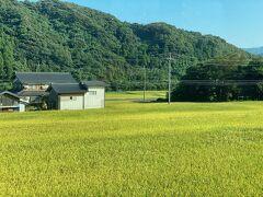 東美浜駅で田んぼが見えた。  この時期の田園の景色は好き(*´Д`)
