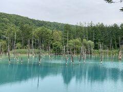ファーム富田を後にして、次は白金地区の青い池へとやってきました。ここへ到着すると結構な人がいて驚きました。 池の色は見る角度によって異なります。今日はちょっと水色に近い感じになってますでしょうか。