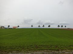 女満別空港からそんなに離れていない。 ここがメルヘンの丘。  お~、これが北海道の風景だ。