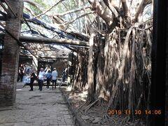 安平樹屋です。建物と言うより単に樹木が茂っているだけにも見えます。