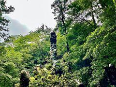翁杉も綺麗に見える。 本当はもっと大きい杉だったらしいけど翁杉の幹内部の約90%が腐朽により空洞化していて折れてしまったとの事。樹齢が長く大きな木だとそう言うこともあるんだね。