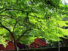モミジの向こうに朱色のお社が見えました。 富部神社です。