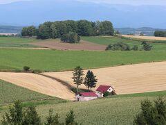 次に向かったのは新栄の丘です。まず、丘の手前の東側に見える赤い屋根が見える丘で停車。小麦畑は収穫を終えていました。手前に白く見えるのはそばの花でしょうか。