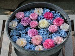 そして、翌日、私の定例となった上野ファームの花巡りをちょっとだけ。時間がなかったので午後に少しだけ眺めてきました。たまたまラッキーで、この日は水鉢に花が飾ってありました。青いアジサイに淡い暖色のバラの花が映えます。