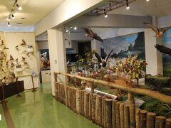2階は自然について。海と山に面した地形の町には数多くの動植物が存在していた。 隣接する建物には有効としてある青森県弘前市と沖縄県竹富町の展示もあり、なかなか充実した博物館だった。