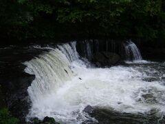 これがさくらの滝。正直、ここは訪れてよかったと感じた。 何の変哲のない滝をイメージしていたが、サクラマスが滝に向かって遡上しようと何度もジャンプする姿を見られるのだ。 画像ではわかりづらいが、2匹のサクラマスが滝にジャンプしている。 見るなら6月から8月にかけてがシーズン。