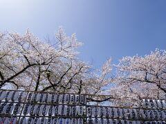 宝蔵門から仲見世通りの方へ歩いていくときれいな桜も見えてきました。伝法院は普段一般公開されていないのですが、一度は入ってみたいです。