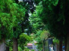 長谷川酒造からすぐ近く通り沿いにあるのが 「光福寺」。北越戊辰戦争での長岡藩本陣と なった歴史的な場所。