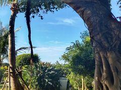 朝食は昨日と同じレストランへ 朝食の後、ホテルの中庭、プルーサイドを散歩  家にもあるガジュマルの木と青い空  やっぱり青い空を見ていると気持ちも心も元気になります。
