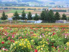 青い池から隣町上富良野町のフラワーランドまでやってきました。これからの時季は秋の花ダリアが見頃です。