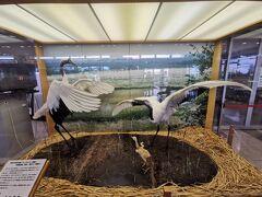 釧路空港には、丹頂鶴のはく製が鎮座していました。釧路は、丹頂鶴で有名なんですね。