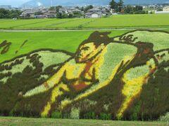 7種類の稲が使われているそうで会場内のプランターに見本の稲が植えられていました