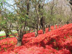 ここのところの涼しい気温のおかげで、 偶然にも土手と桜堤の双方の満開時期が 一緒となったようだ。