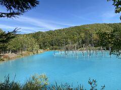 青い池 入口付近はあまり青くないですが、奥に行けば行くほど青いです。