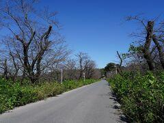 石戸城跡の麓を回り込み、一夜堤口から公園を出る。そこは、桜土手と呼ばれている場所で、桜の季節にはなかなか綺麗な所だ。ところが、出てみると、桜の樹がかなり枝を切られていて、青い空が広がっていた。