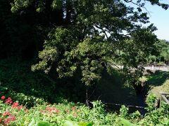 その土手は、正式には城ヶ谷堤と言う。城と言う名が付いている通り、すぐ近くに城跡がある。その城は、扇谷上杉氏が築いた石戸城である。堤のすぐ南側には、一の郭の土塁が観られた。