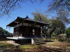そして、小さな御堂があるだけの東光寺に辿り着いた。その傍らに、蒲桜が立っている。蒲冠者源範頼に因んだ桜で、日本五大桜のひとつである。天然記念物に指定された大正の頃は、大きな四つの枝に分かれていたそうだが、今は年老いて、株別れして残った部分が花を付けているそうだ。