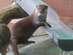 私(たち)の目的は、水族館のカワウソなので直行! いたっ♪