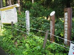 名水百選「龍ヶ窪」の中心です。うっそうとした林の中で、とても神秘的な所です。