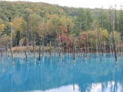 3日目は雨。山はガスがかかってしまっていたので、チェックアウトした後は青い池を目指しました。青い池に着いた時は雨が上がっていたので観光。