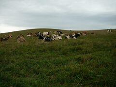 美瑛放牧酪農場  丘を散策