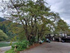 越後湯沢から、1日4本しかない南越後観光バス(830円)に乗り「小下里」で下車をしました。  バスを降りてから橋を渡って、少し歩くと信濃川沿いに有る「越後田中温泉 しなの荘」が見えて来ました。