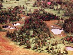 上の写真の左中央をズームすると 芳ヶ平湿地