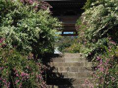 10:10 海蔵寺  階段を隠すように咲く萩が見事