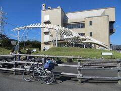 14:16 道の駅和田浦に到着。休憩します。この辺りは捕鯨基地でクジラが食べられると知っていましたが、タイミング的に無理でした。クジラは小学校の給食でよく食べていました。