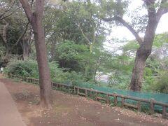 善福寺川沿いに公園が続く