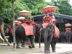 象キャンプへやってきた