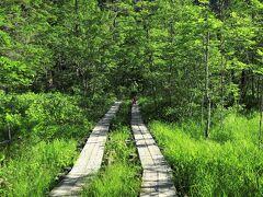 山に登らないクッシーは、梓川沿いに設けられた探勝路をハイキング 明神池を目指し、往きは梓川右岸道を歩きます。