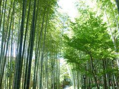 竹林の小径の真ん中に座るスペースがあり、休憩しました。 とても気持ちの良い場所です。